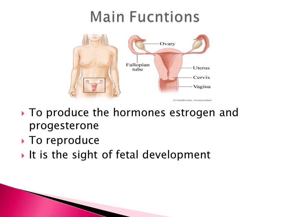 Main Fucntions To produce the hormones estrogen and progesterone