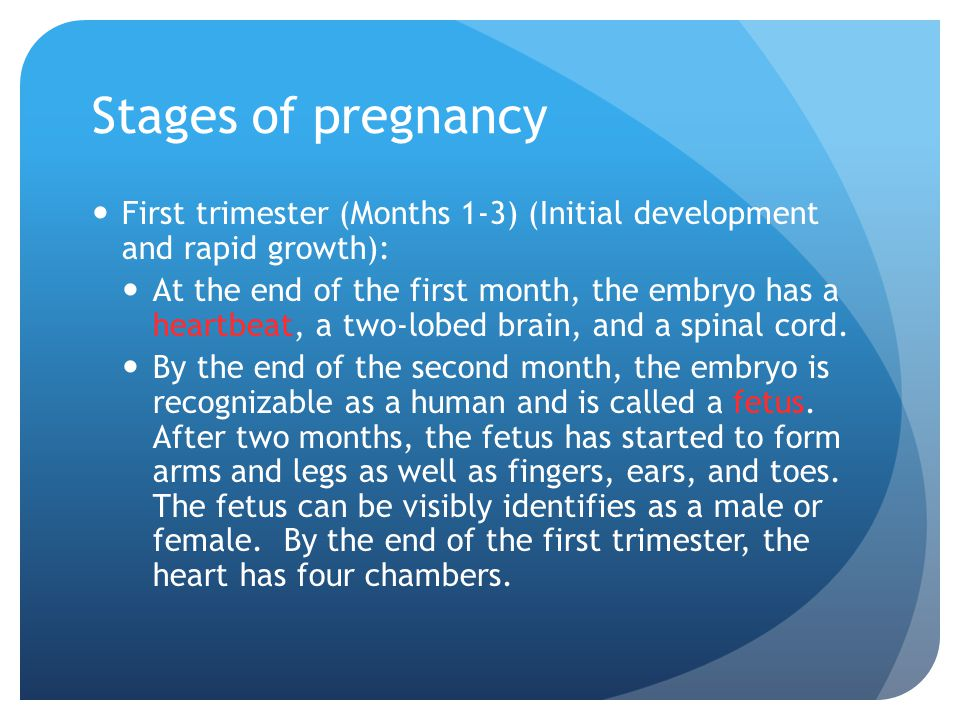 Stages of pregnancy First trimester (Months 1-3) (Initial development and rapid growth):