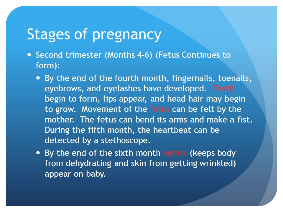 Stages of pregnancy Second trimester (Months 4-6) (Fetus Continues to form):