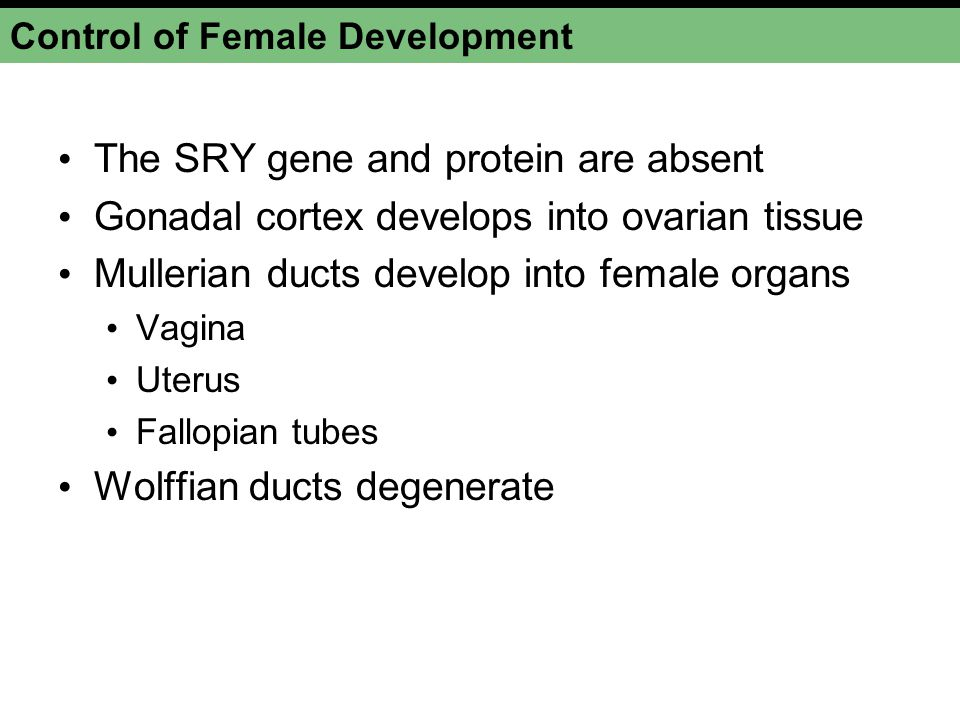Control of Female Development