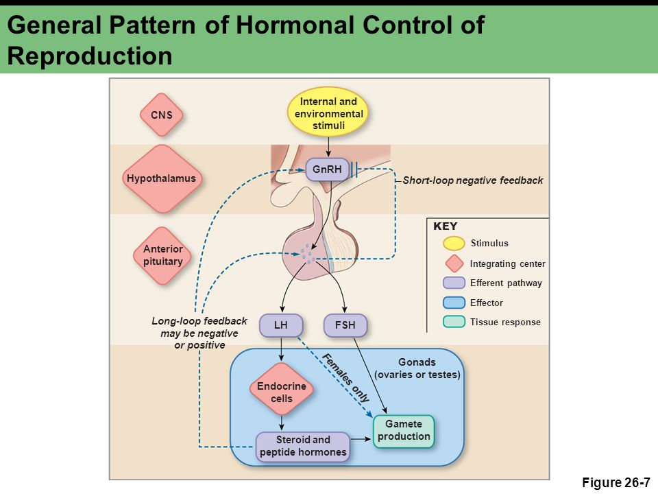 General Pattern of Hormonal Control of Reproduction
