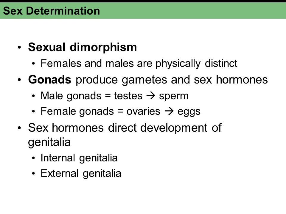 Gonads produce gametes and sex hormones