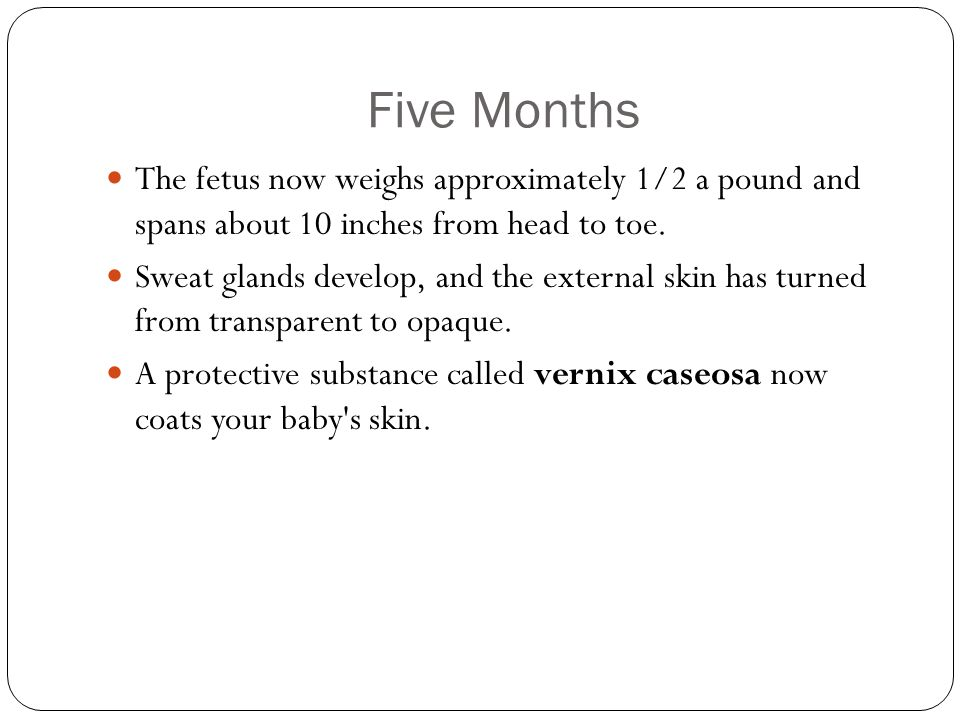 Five Months The fetus now weighs approximately 1/2 a pound and spans about 10 inches from head to toe.