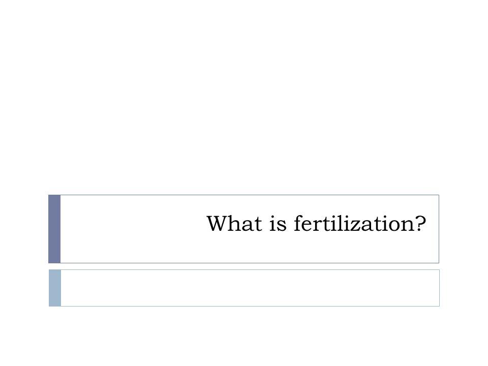 What is fertilization