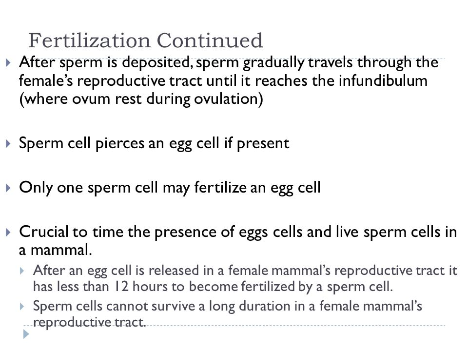 Fertilization Continued