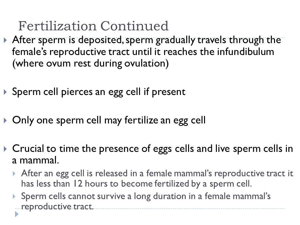 Fertilization Continued