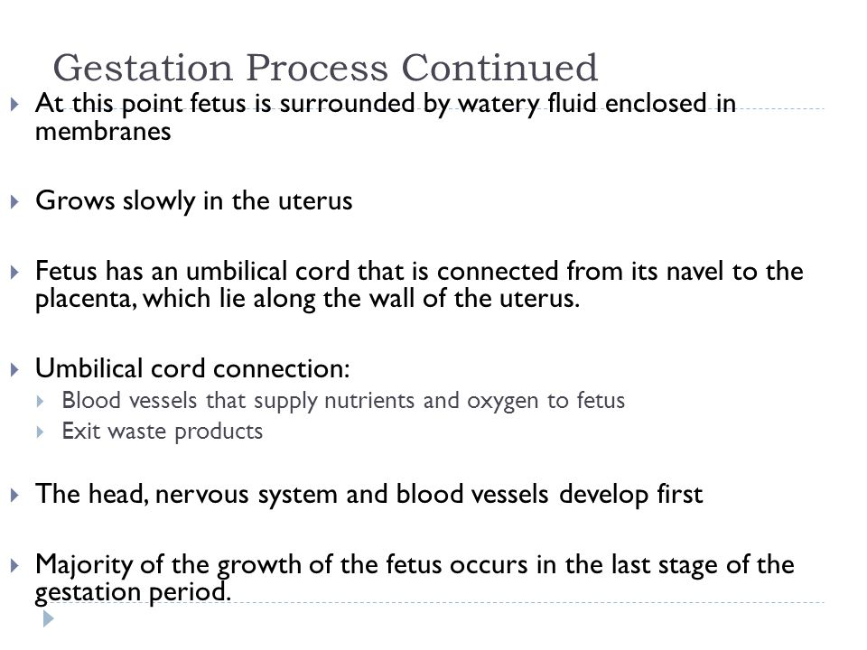 Gestation Process Continued