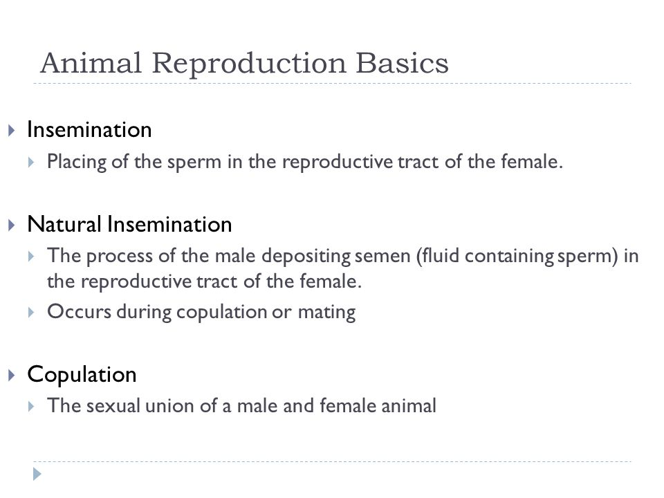 Animal Reproduction Basics