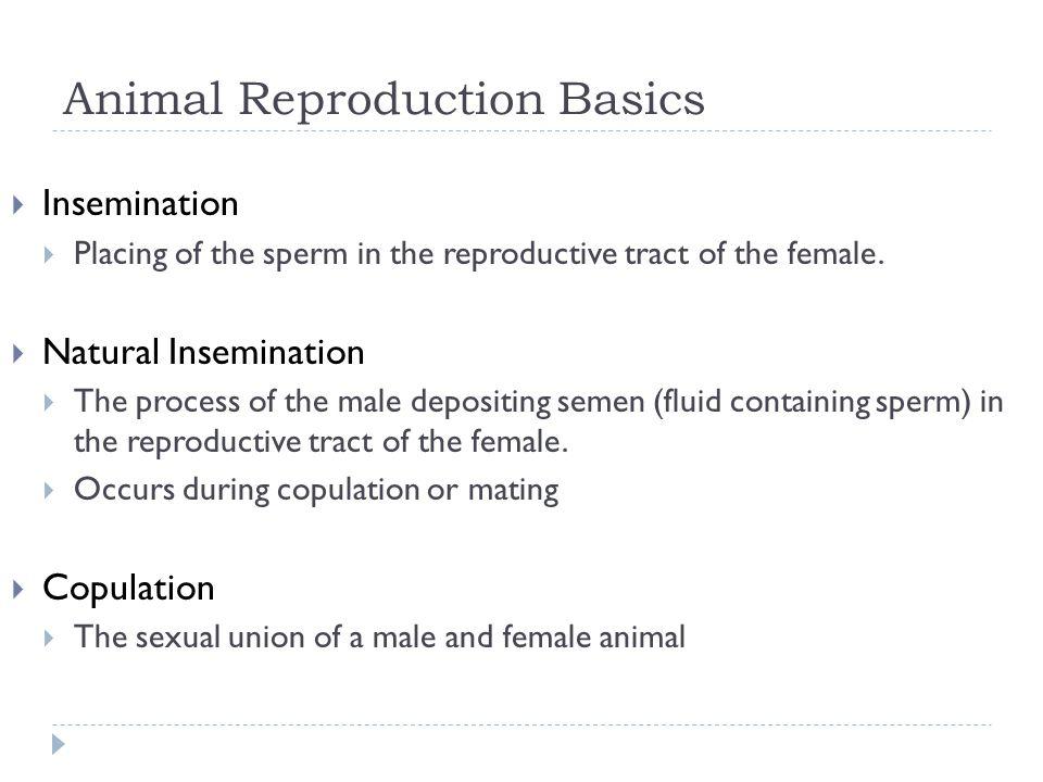 Animal Reproduction Basics