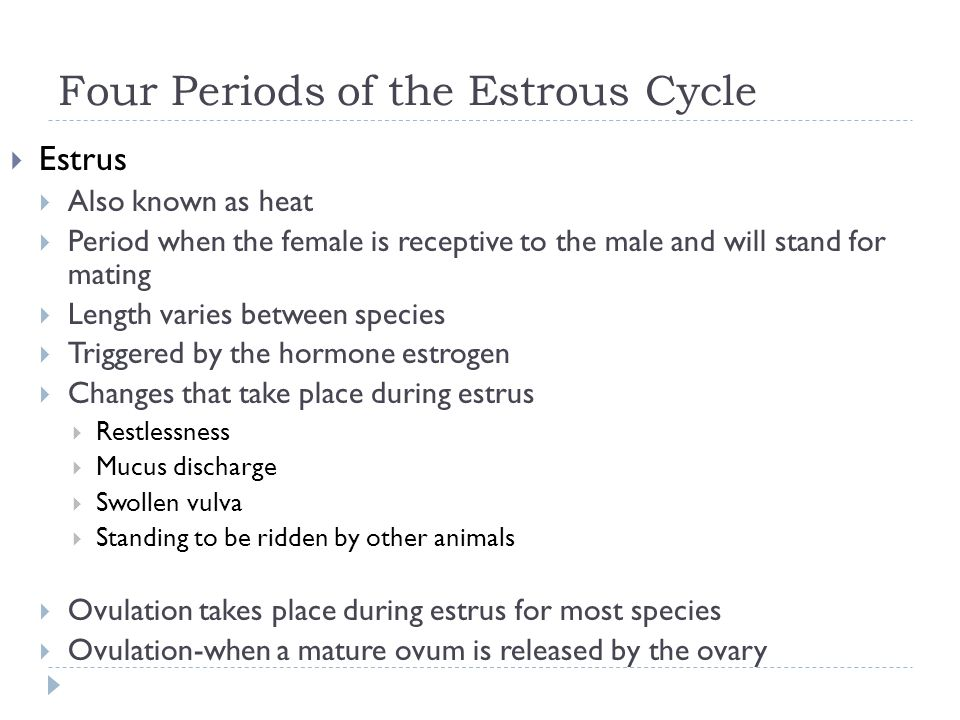 Four Periods of the Estrous Cycle