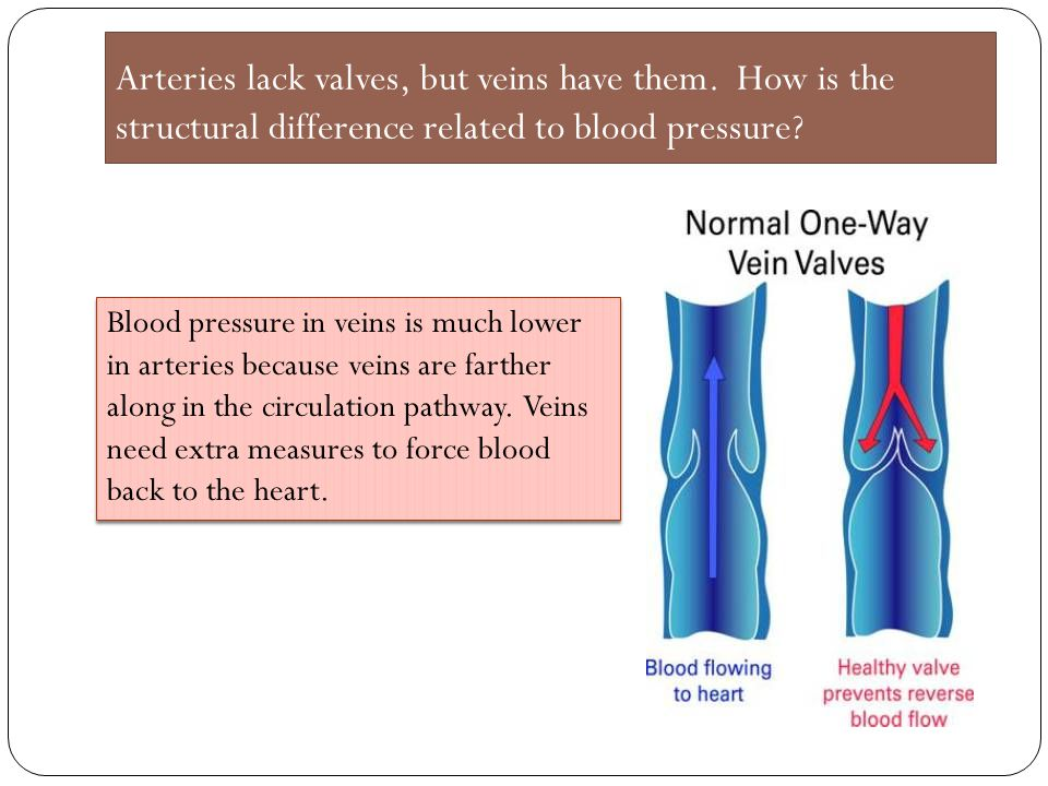 Arteries lack valves, but veins have them