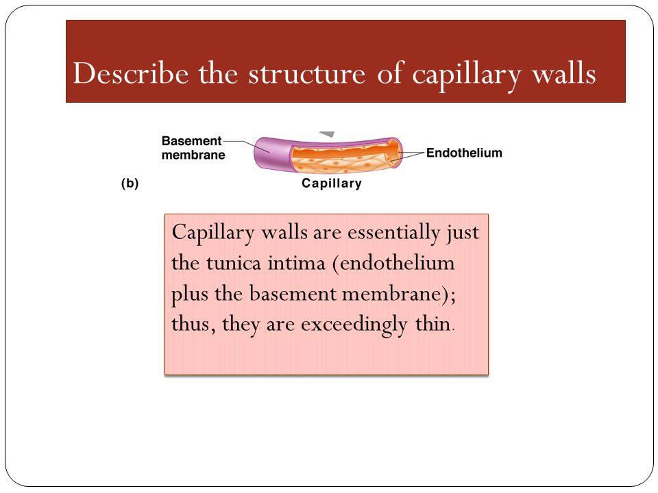 Describe the structure of capillary walls