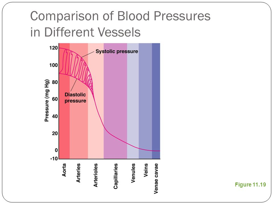 Comparison of Blood Pressures in Different Vessels