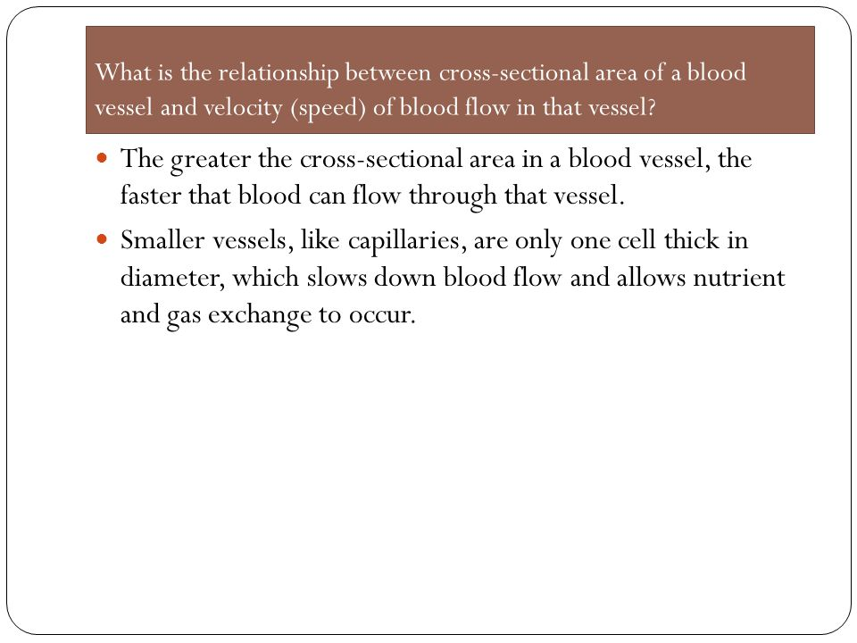 What is the relationship between cross-sectional area of a blood vessel and velocity (speed) of blood flow in that vessel