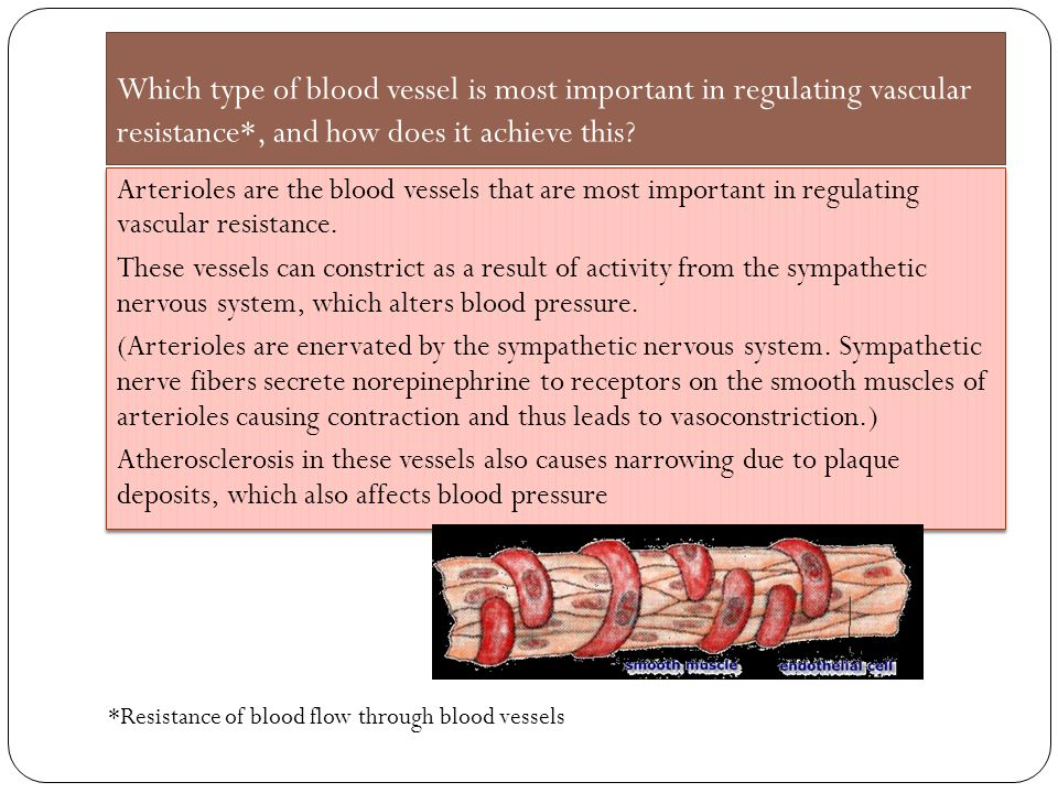 Which type of blood vessel is most important in regulating vascular resistance*, and how does it achieve this