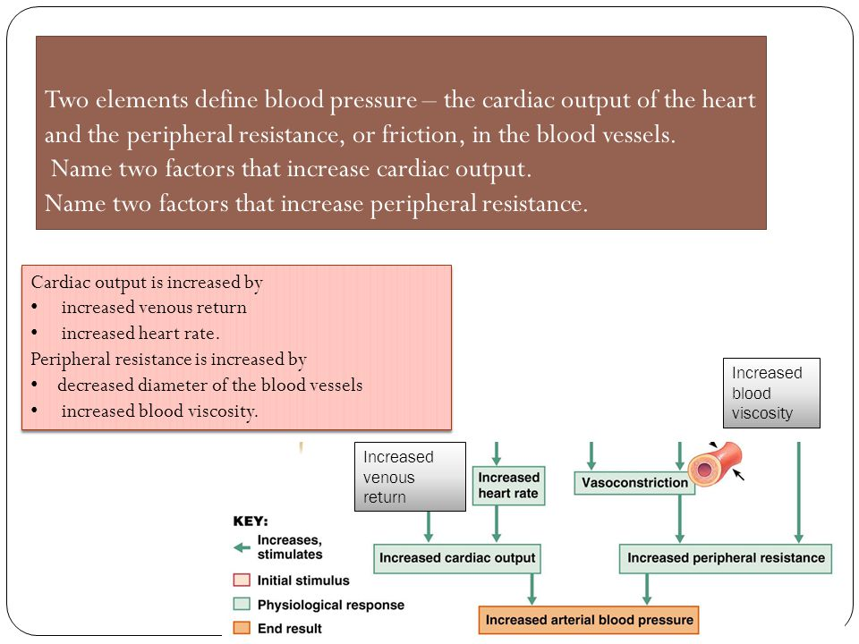 Two elements define blood pressure – the cardiac output of the heart and the peripheral resistance, or friction, in the blood vessels. Name two factors that increase cardiac output. Name two factors that increase peripheral resistance.