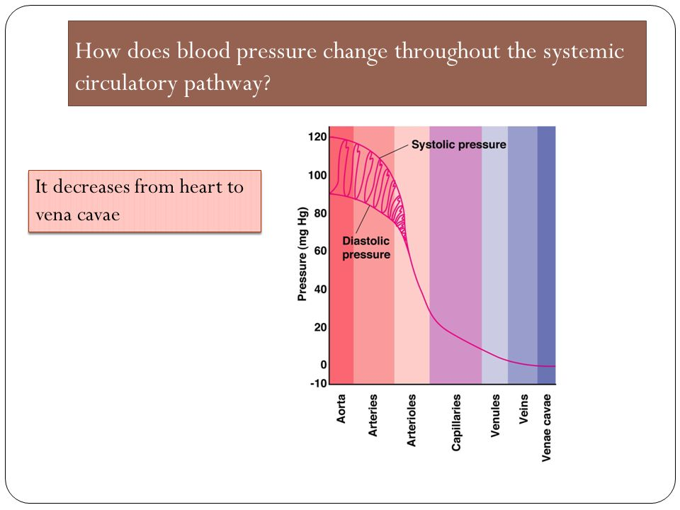 How does blood pressure change throughout the systemic circulatory pathway
