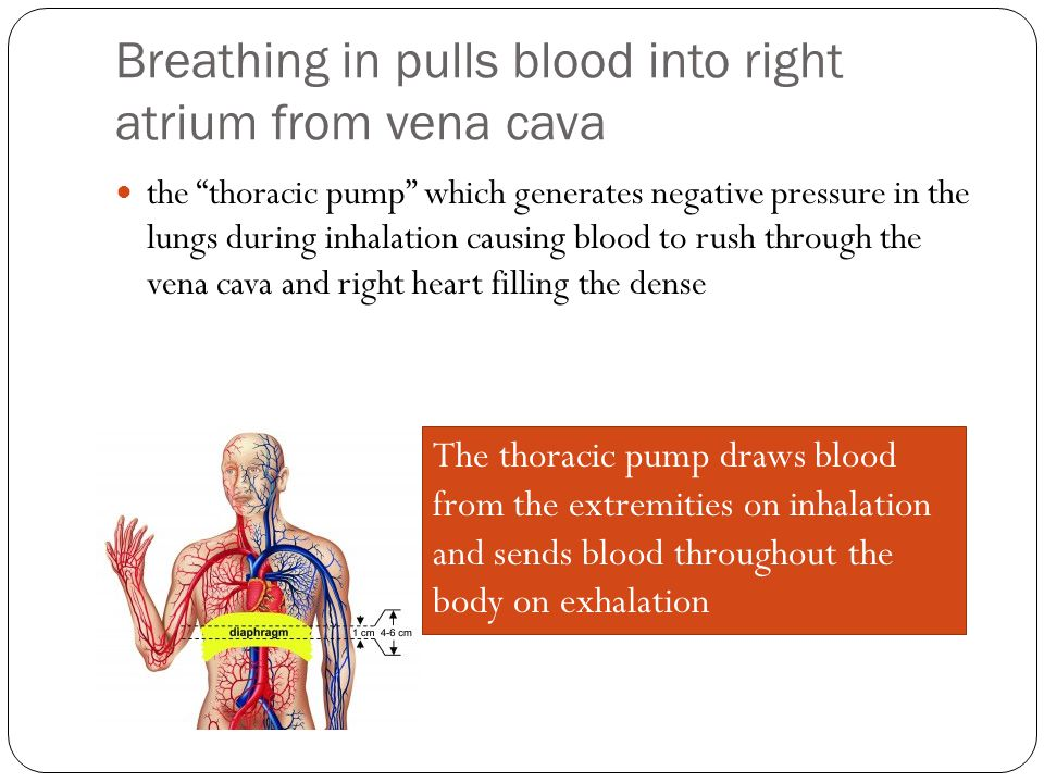 Breathing in pulls blood into right atrium from vena cava