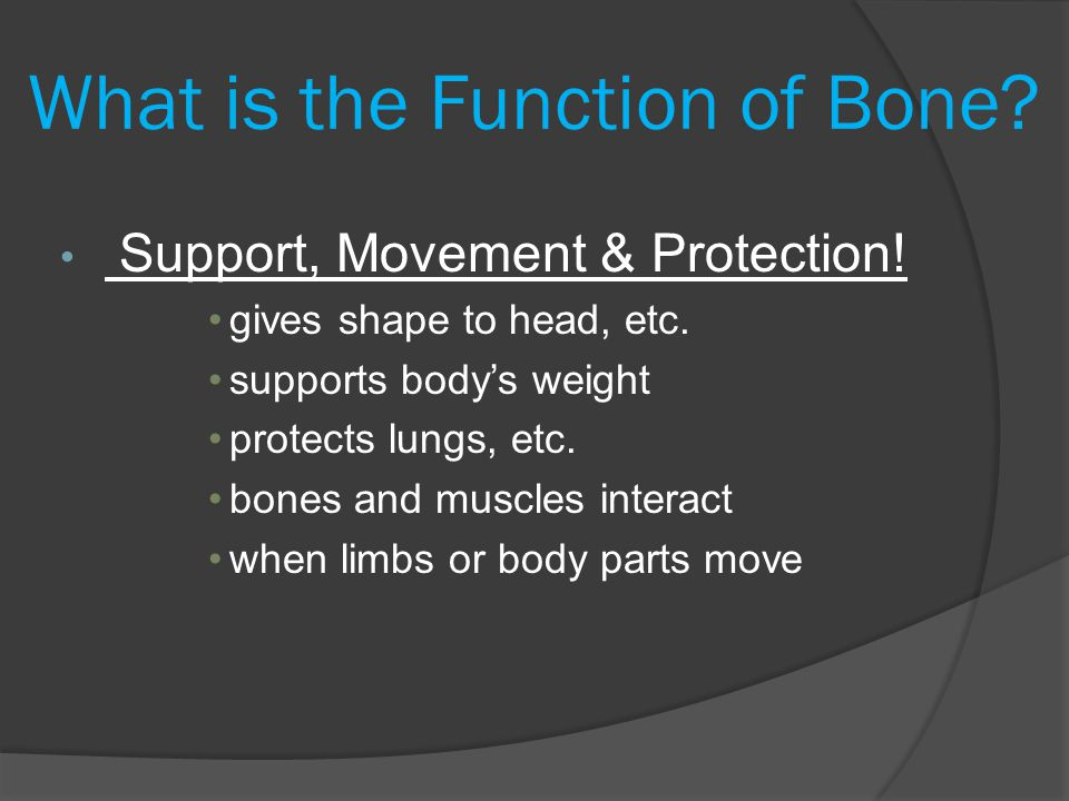 What is the Function of Bone