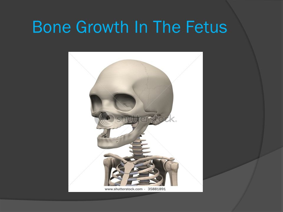 Bone Growth In The Fetus