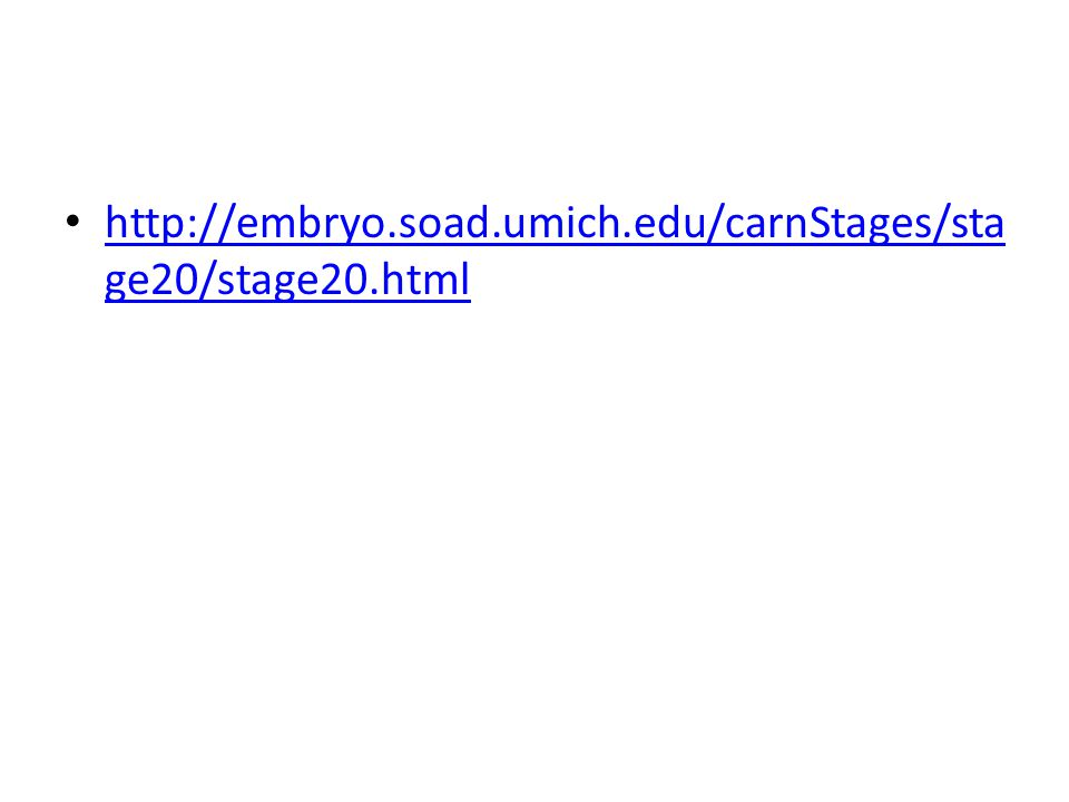 http://embryo.soad.umich.edu/carnStages/stage20/stage20.html