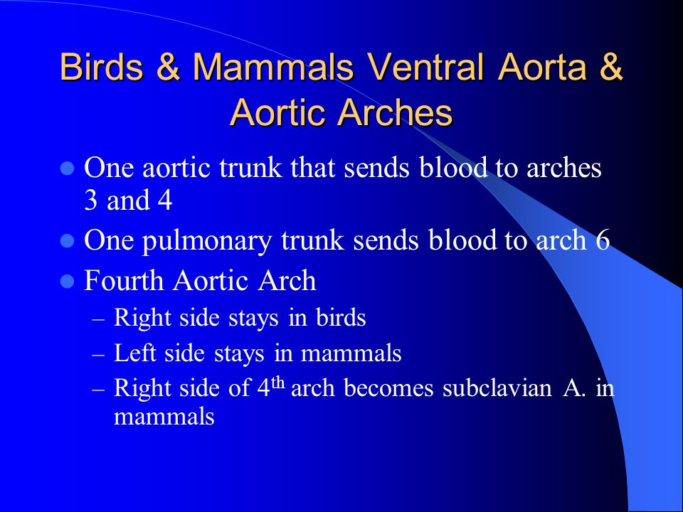Birds & Mammals Ventral Aorta & Aortic Arches