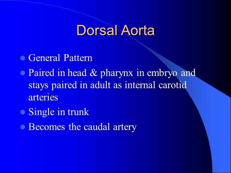 Dorsal Aorta General Pattern