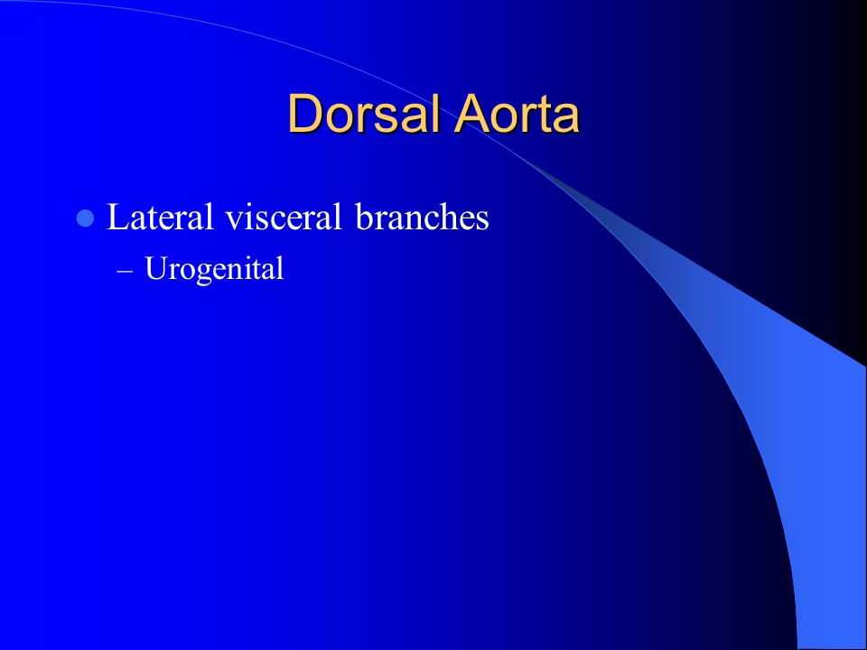 Dorsal Aorta Lateral visceral branches Urogenital