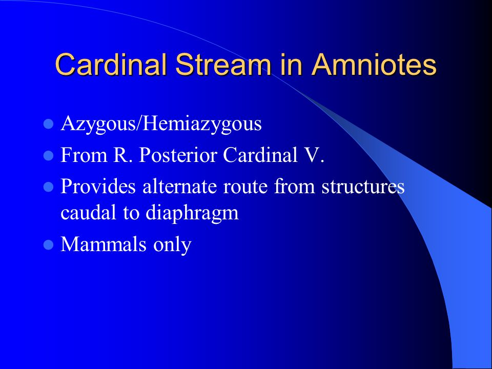 Cardinal Stream in Amniotes