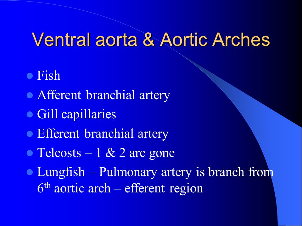 Ventral aorta & Aortic Arches