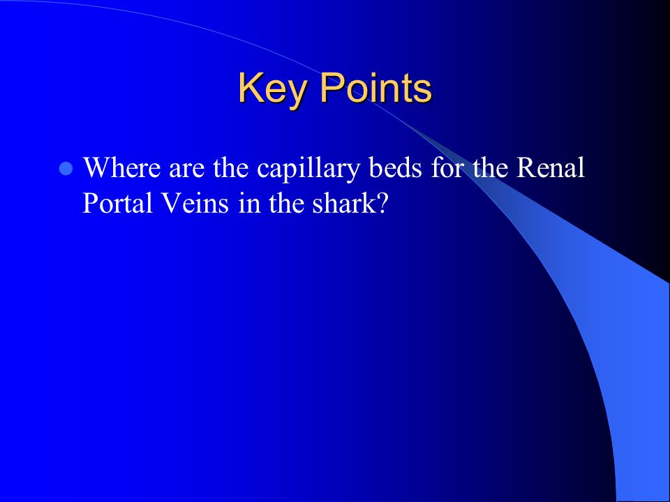 Key Points Where are the capillary beds for the Renal Portal Veins in the shark