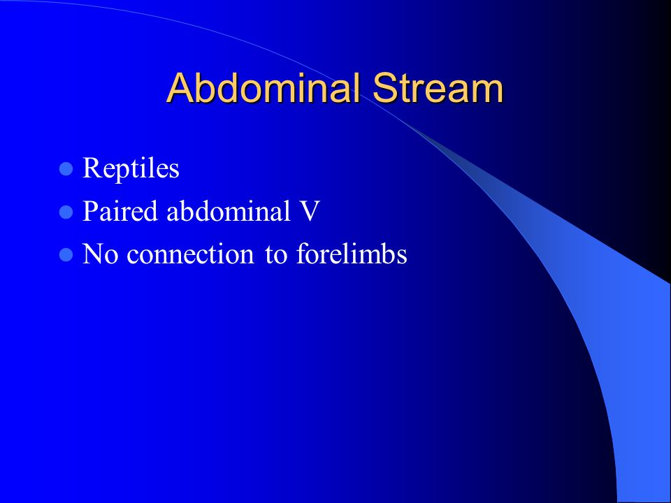Abdominal Stream Reptiles Paired abdominal V