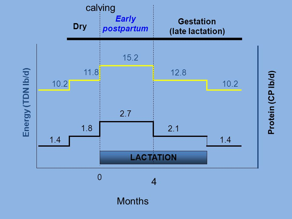 calving 4 Months Early postpartum Gestation (late lactation) Dry 2.1