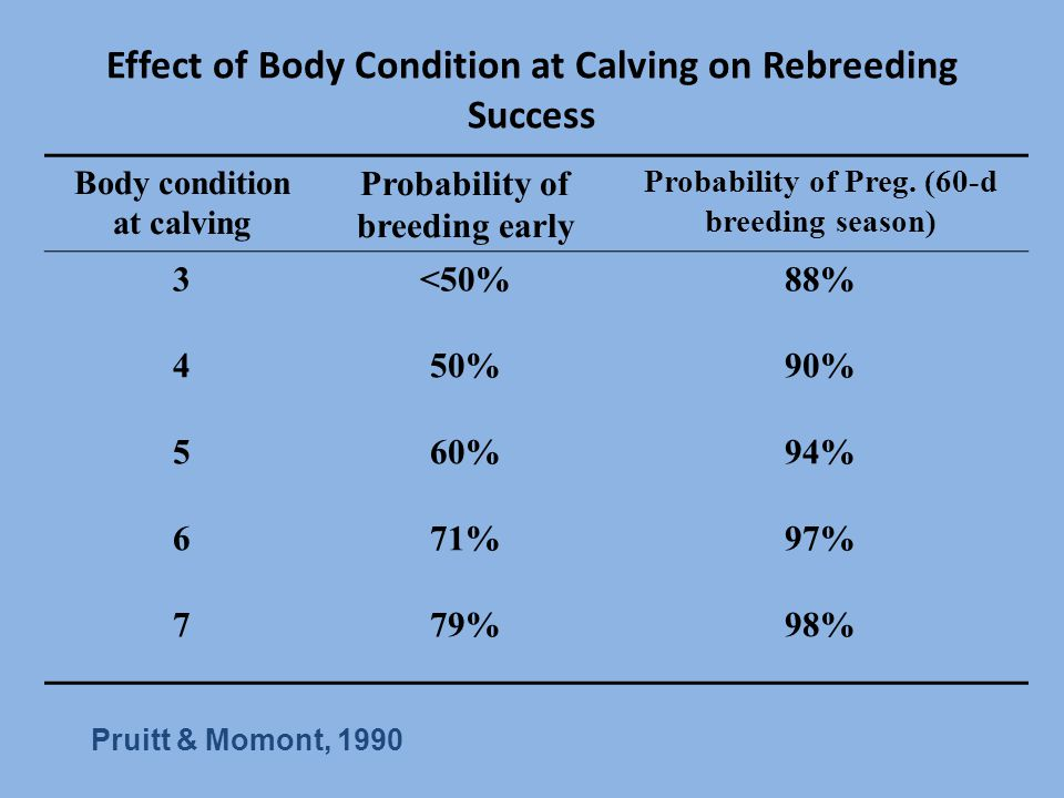 Effect of Body Condition at Calving on Rebreeding Success