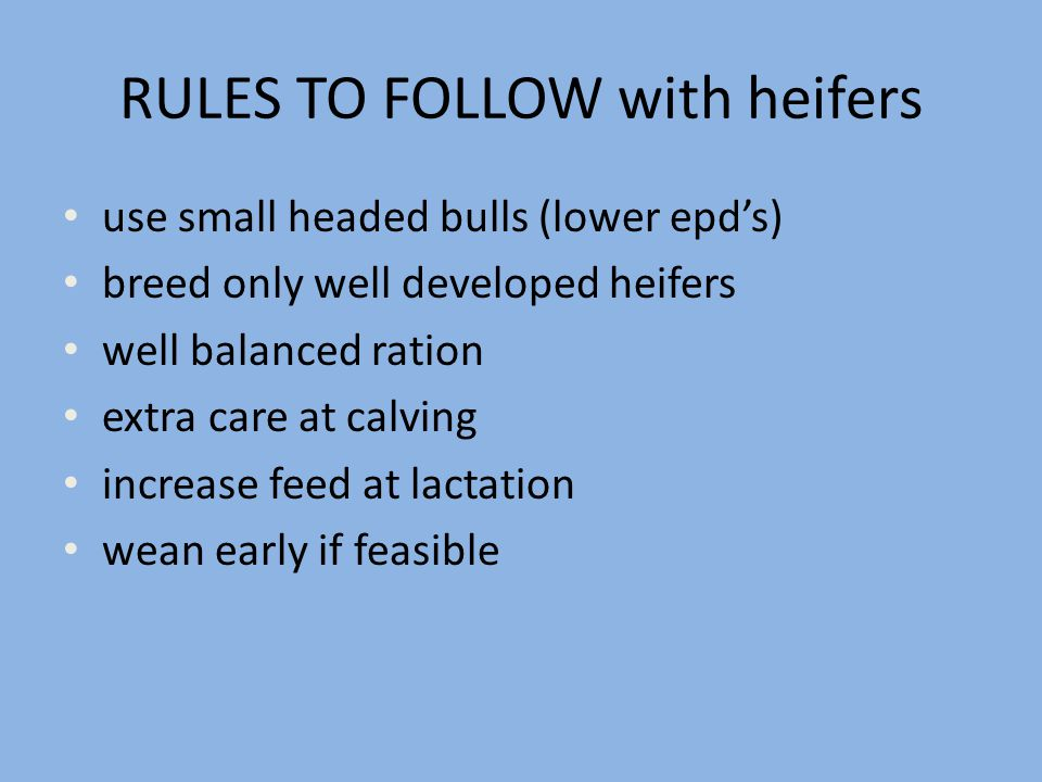 RULES TO FOLLOW with heifers