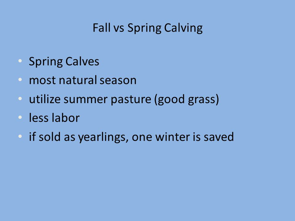 Fall vs Spring Calving Spring Calves. most natural season. utilize summer pasture (good grass) less labor.