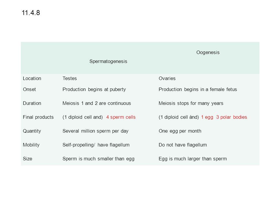 11.4.8 Spermatogenesis Oogenesis Location Testes Ovaries Onset