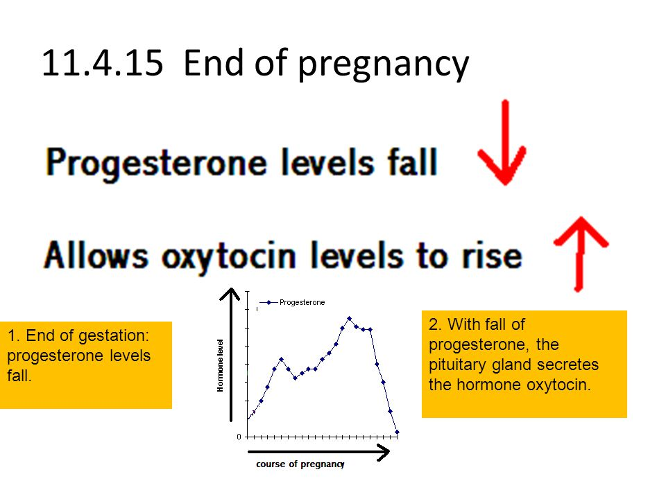 11.4.15 End of pregnancy 2. With fall of progesterone, the pituitary gland secretes the hormone oxytocin.