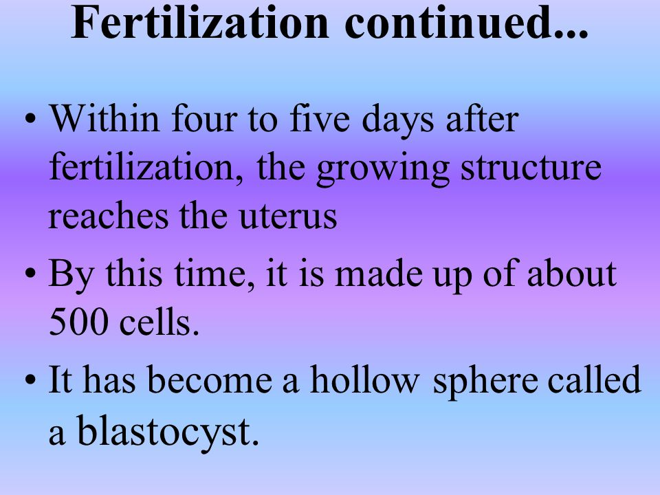 Fertilization continued...