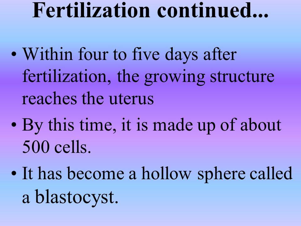 Fertilization continued...
