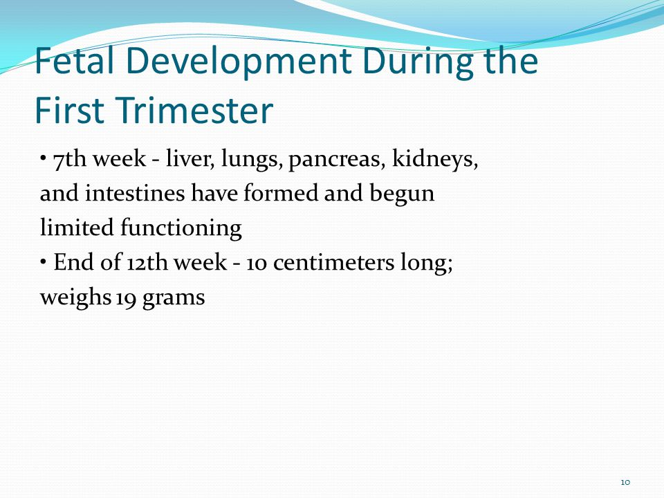 Fetal Development During the First Trimester
