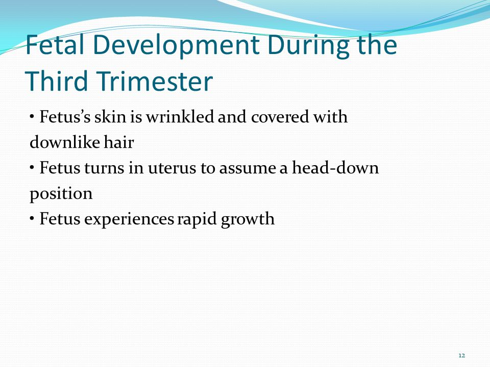Fetal Development During the Third Trimester