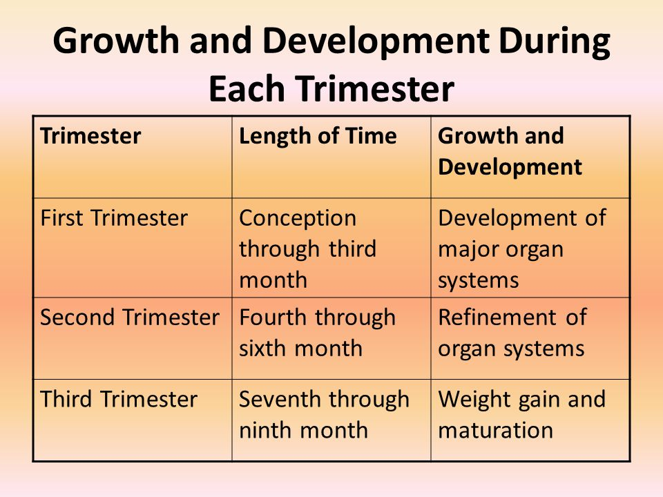 Growth and Development During Each Trimester