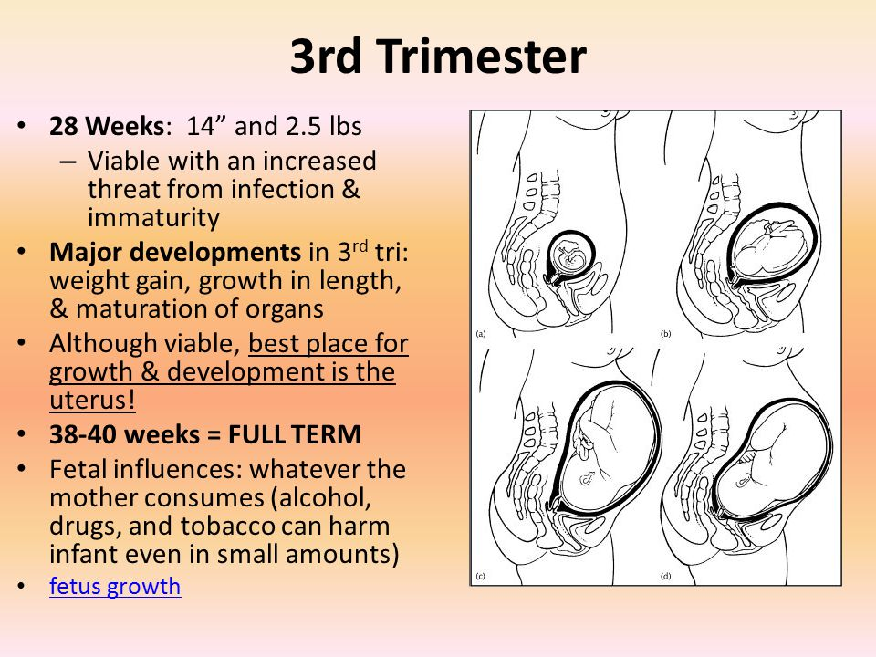 3rd Trimester 28 Weeks: 14 and 2.5 lbs