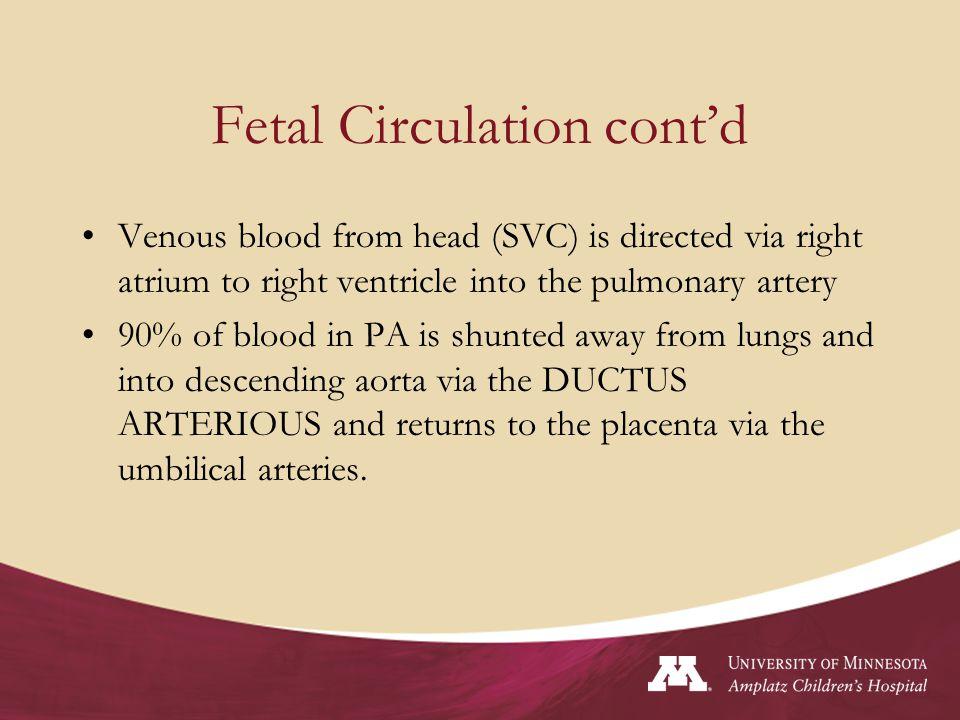 Fetal Circulation cont'd