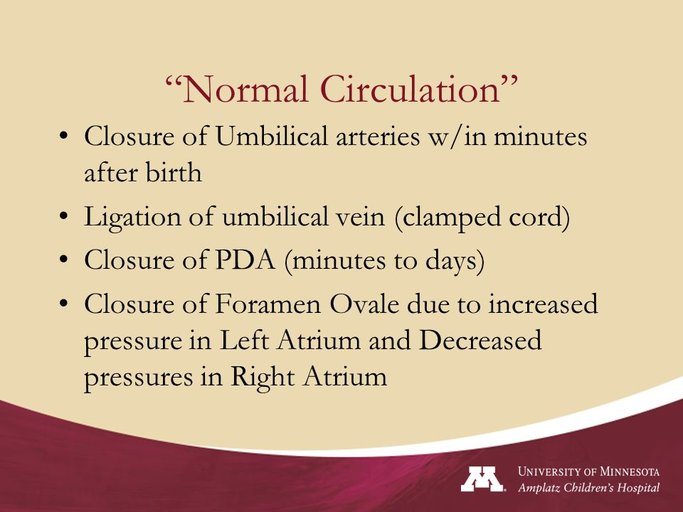 Normal Circulation Closure of Umbilical arteries w/in minutes after birth. Ligation of umbilical vein (clamped cord)