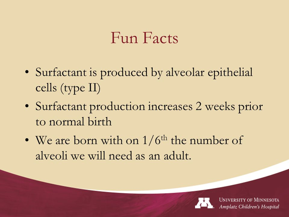 Fun Facts Surfactant is produced by alveolar epithelial cells (type II) Surfactant production increases 2 weeks prior to normal birth.