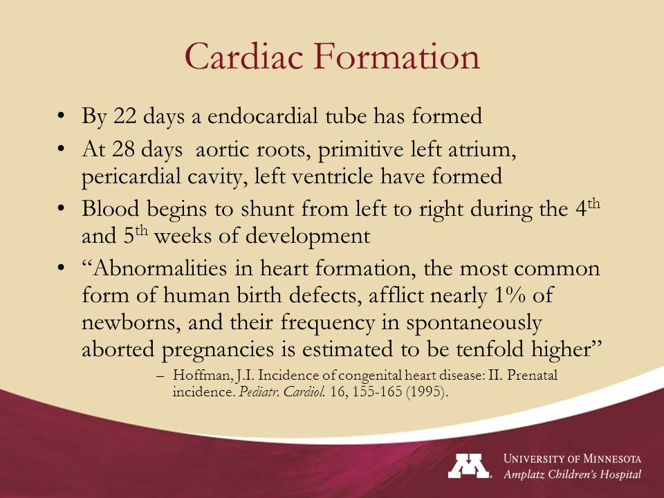 Cardiac Formation By 22 days a endocardial tube has formed