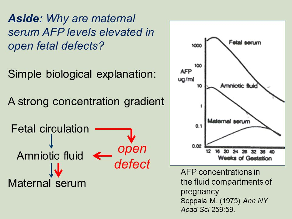 Aside: Why are maternal serum AFP levels elevated in open fetal defects