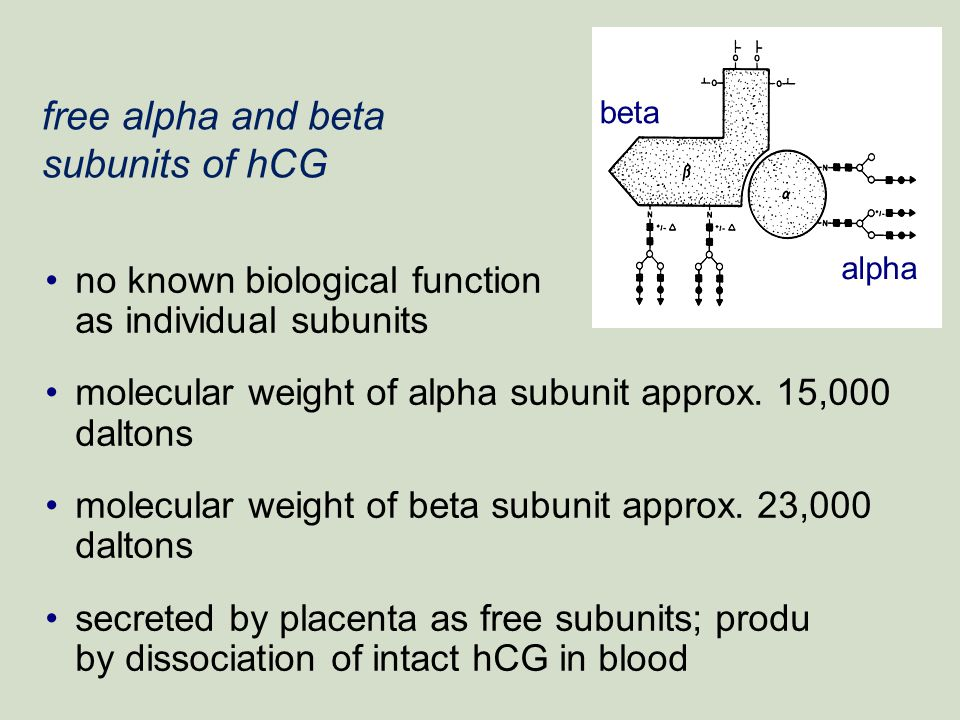 free alpha and beta subunits of hCG